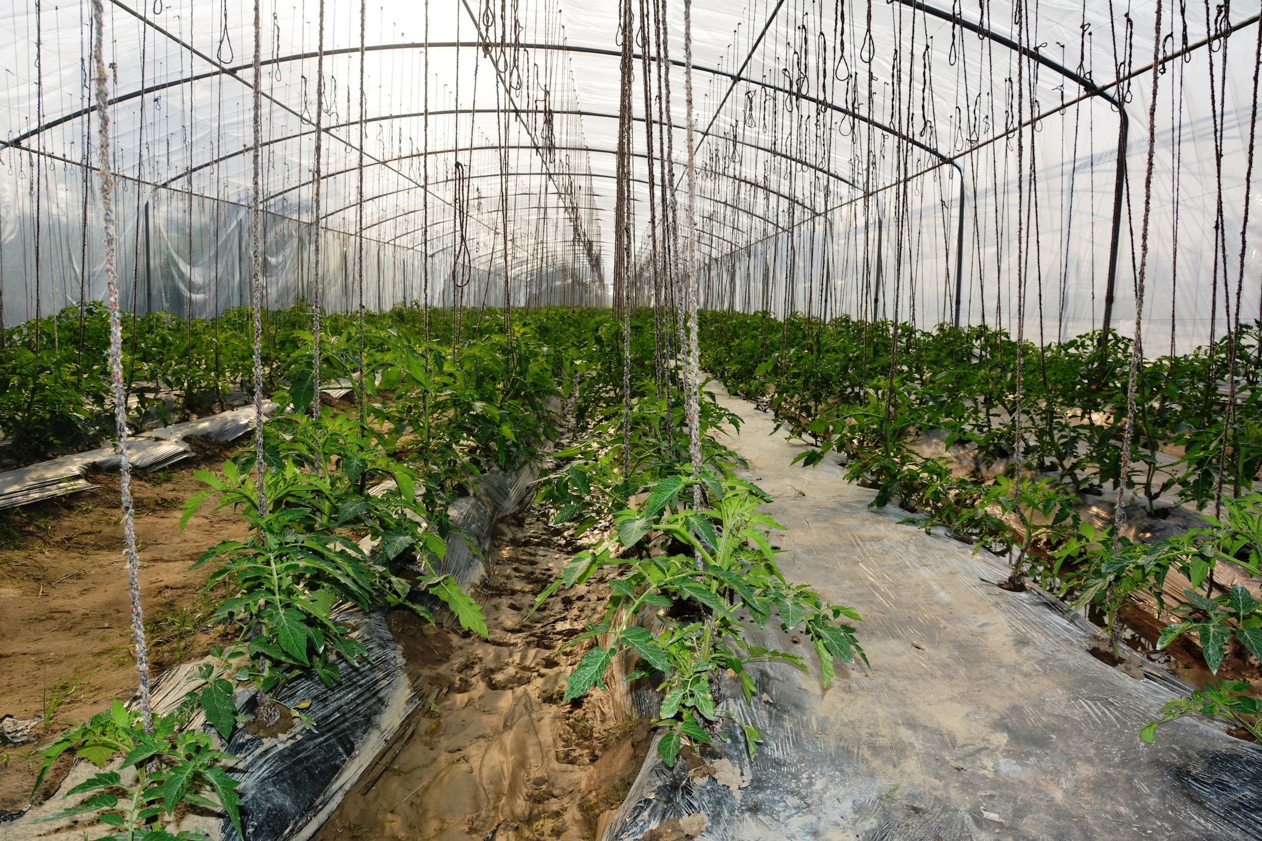 High Value Off Season Vegetables | TAP-The Agri Busniess Project